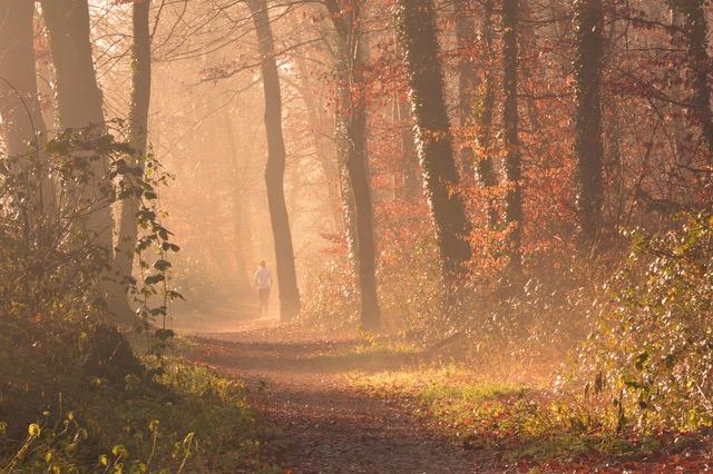Træn dig sund i naturen