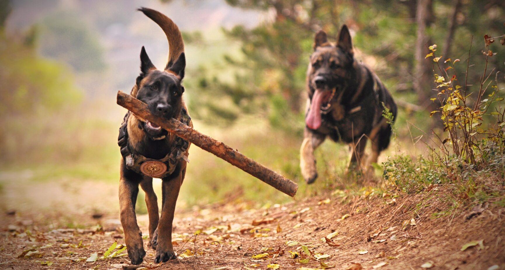 Overhold hundeloven